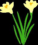 daffodil-1295747