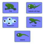 frog lifecycle cards